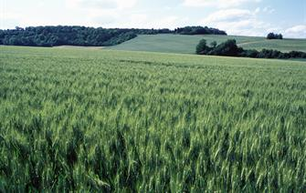 Towards a better understanding of the impact of extreme climate events on wheat yields