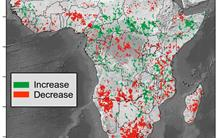 A new tool to monitor the carbon budget of vegetation: first application to the African continent
