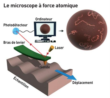 Le microscope à force atomique