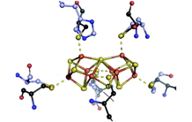 A successful fusion for a key intermediate en route to the nitrogenase active site