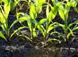 Végétation et sols : quelles capacités d'absorption du CO2 ?