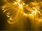Vents et champs magnétiques stellaires