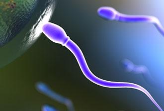 Un modèle d'infertilité, à suivre