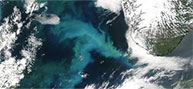 Quand El Niño aide à prédire l'avenir du phytoplancton