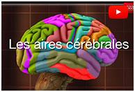 Comment notre cerveau apprend-il à lire?