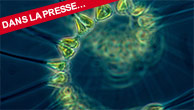 Comment le phytoplancton domine-t-il les océans?