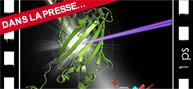 Cinéma moléculaire ultra-rapide: voir les protéines absorber la lumière