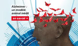 Alzheimer : un modèle animal inédit