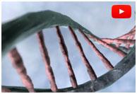 Beta thalassémie: nouveau succès en thérapie génique