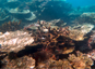 Changement climatique et pratiques locales : double peine pour un récif corallien