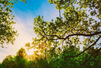 Comment les forêts méditerranéennes vont-elles s'adapter au changement climatique ?