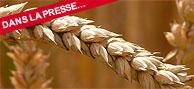 le génome du blé est séquencé