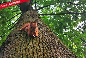 La longévité des arbres