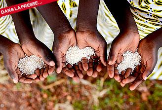 Berceau de la domestication du riz africain