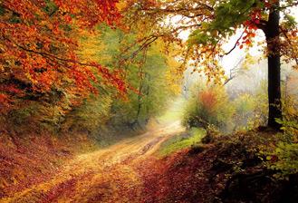 Europe : gestion forestière et changement climatique