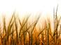 Stagnation des rendements agricoles en France
