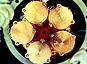 Cupid-0 mise sur la double détection chaleur-lumière