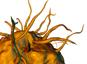 Nanoparticules: les sphères moins toxiques que les tubes?