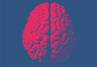 Biologie de la frontière entre cerveau et système sanguin