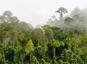 Quand la photosynthèse déclinera-t-elle sous l'effet du réchauffement ?