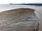 L'ADN environnemental, nouveau traceur de sédiments dans les rivières
