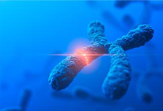 ADN : ça casse, mais ça passe