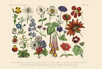Évolution: les plantes déjà très innovantes avant la conquête des continents