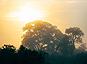 Les forêts tropicales africaines n'ont pas récupéré après la sécheresse extrême en 2015-2016