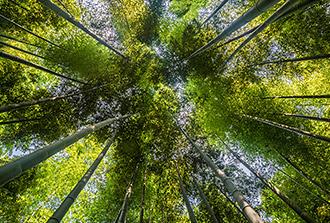Le dépôt d'azote sur les bambous, c'est bon pour le climat!