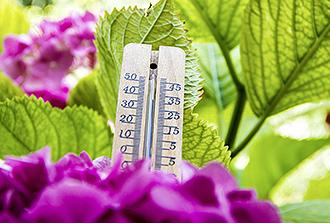 Une protéine « thermomètre » qui contrôle la floraison des plantes
