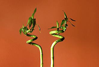 Les bambusurils: de la nouvelle chimie pour le médical