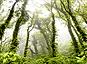 La végétation, influenceuse du climat