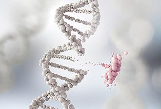Génome : éclairage sur l'insertion de séquences mobiles