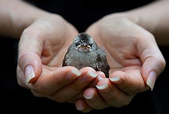 Regard moléculaire sur la transmission de la grippe aviaire à l'Homme