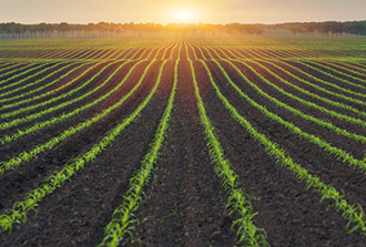 Comment augmenter les rendements agricoles en optimisant la photosynthèse ?