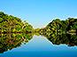La forêt amazonienne un peu moins vulnérable au changement climatique que prévu
