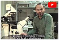 CYTOMORPHO, l'histoire d'un labo accro à la mécanique des cellules