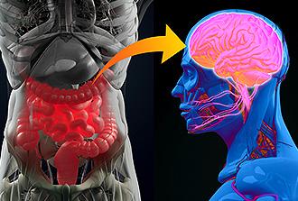 Comment un déséquilibre du microbiote intestinal peut induire une dépression