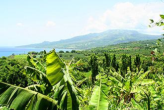Chlordécone : quand l'herbicide libère le pesticide des sols antillais…