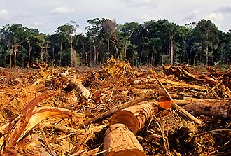 La forêt amazonienne brésilienne a déstocké du carbone au cours de la dernière décennie