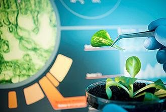 Comment les plantes gèrent le stress grâce à leurs stomates