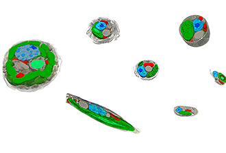 Phytoplancton : architecture cellulaire et métabolisme énergétique