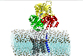 Sarcolipine : double enquête in silico et in vivo