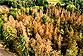 L'humidité des sols régule l'absorption du carbone par la végétation