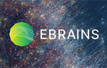 CEA carries for France the EBRAINS infrastructure inscription on the ESFRI roadmap