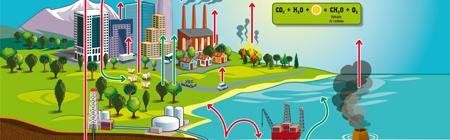 L'essentiel sur le cycle du carbone