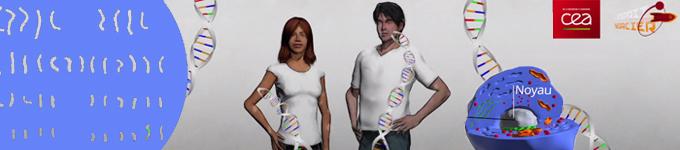 L'Essentiel sur l'ADN