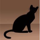 Animation le chat de Schrödinger